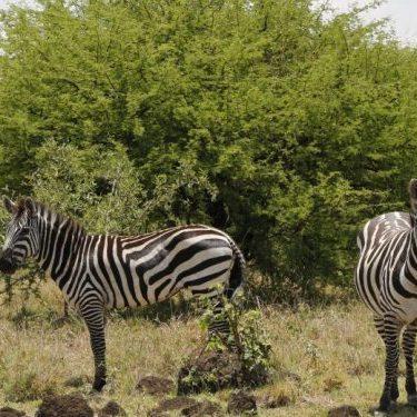 Nature and Animal Tour in Ethiopia