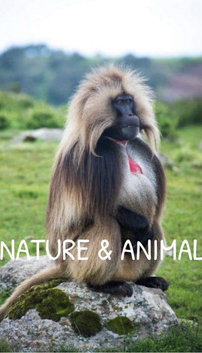 Nature & Animal